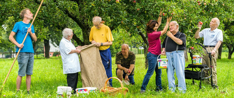 Menschen bei Apfelernte mit Säcken und Körben