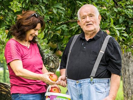 gemeinsame Apfelernte - Frau und Senior legen Äpfel in Korb